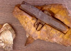 500 Million Years old Hammer found at London, Texas