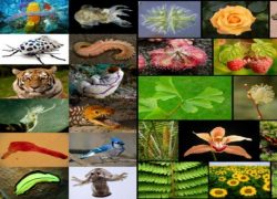 8.4 Millions Species on Earth, according to Padma Purana