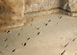 Ancient footprints of Acahualinca in Managua, Nicaragua