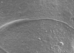 50 Million Years old Animal Sperm found in Antarctica