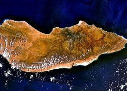 Endemic Species of Socotra Island, Yemen