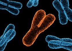 Y Chromosome & Male Lineage, Genetics behind Hindu Gotra System