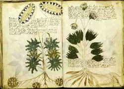 Mysterious Voynich Manuscript – written in Alien Code ?