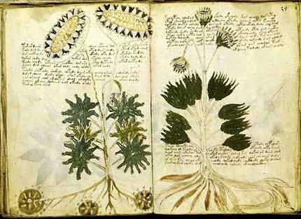 Mysterious Voynich Manuscript – written in Alien Code ?