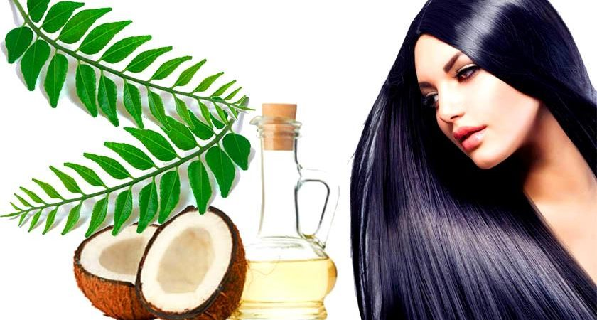 Curry Leaves prevent Premature Hair Fall, Greying, Cholesterol