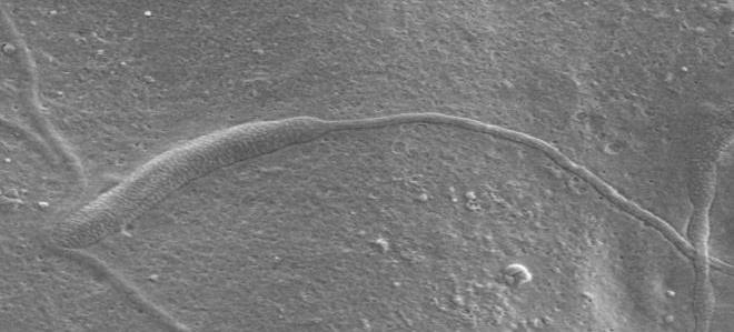 Antarctica Sperm 50 million years