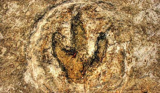 dinosaur footprint jaisalmer