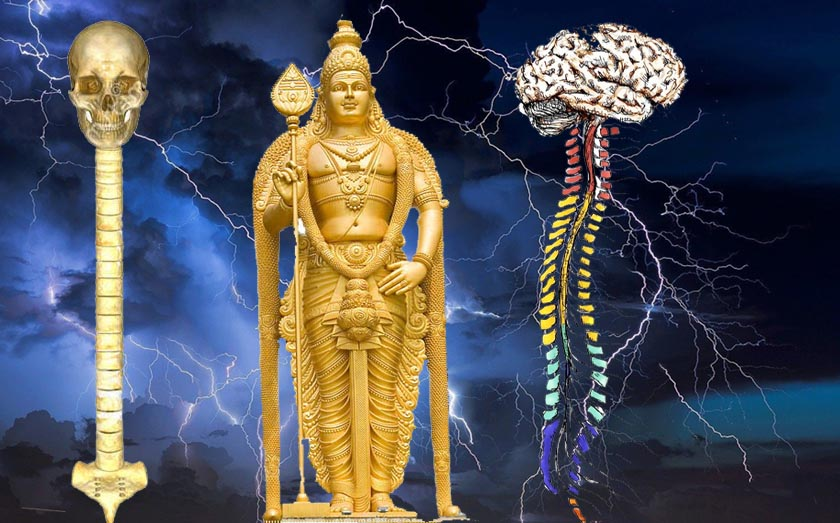 Karthikeya Velayudham Brain Spinalcord