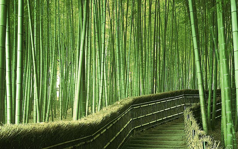 bamboo grass forest siberia china