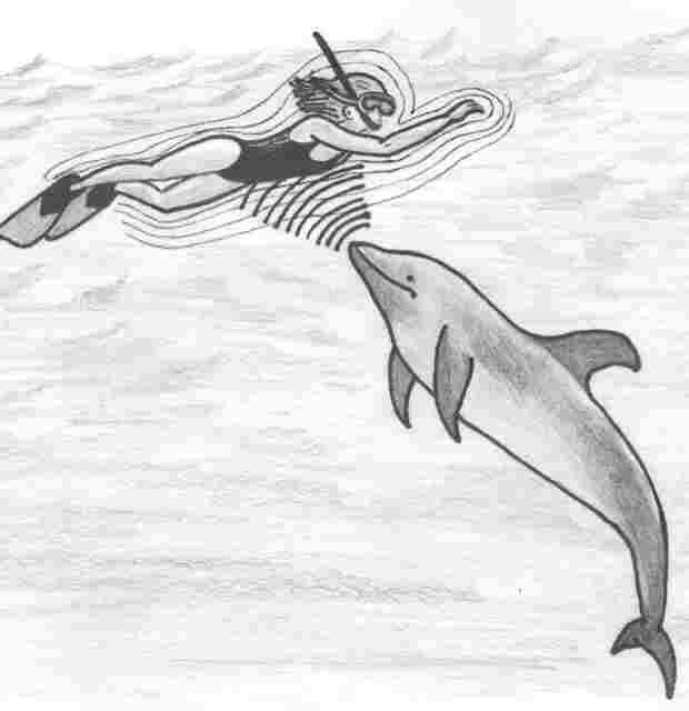dolphin sense human