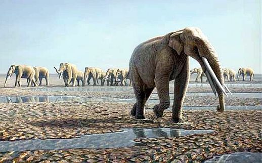 gomphotheres elephant four tusked
