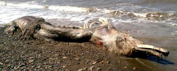sea monster russia